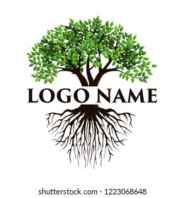 tree logo, vector isolated of tree and roots, logo templates
