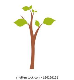 Tree nature ecology