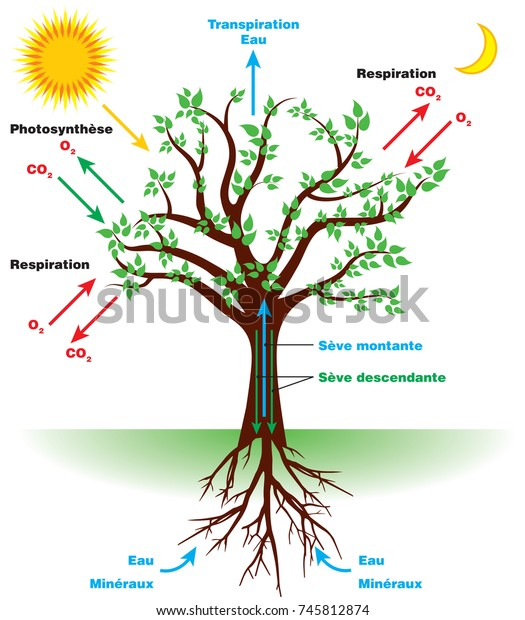 tree photosynthesis diagram french stock vector (royalty free) 745812874 Tree Anatomy Diagram