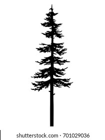 tree pine ink silhouette, black vector cypress forest nature, white and black drawing illustration, icon tree template
