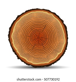 Tree rings, cross section, trunk stump. Vector isolated illustration.