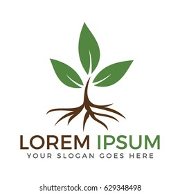 Tree Root and Leaves logo design.