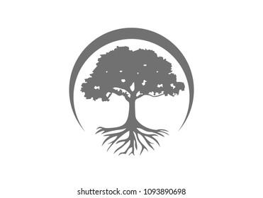 Tree root logo vector