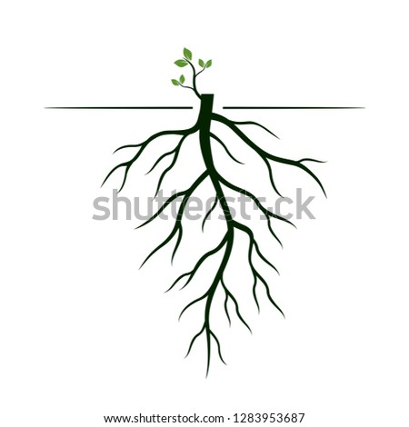 Tree Roots Germinate Limb Roots Plants Stock Vector Royalty Free