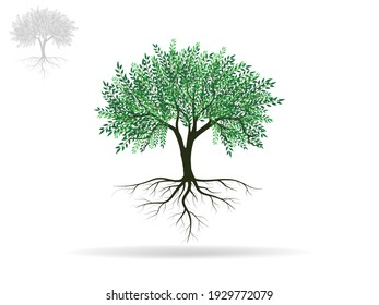 Tree and roots with green leaves look beautiful and refreshing. Tree and roots LOGO style.