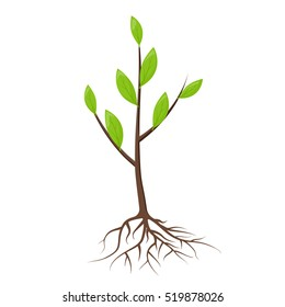 Tree with roots and leaves isolated. Young tree, sapling ready for planting. Planting of greenery concept. Gardening, agriculture. New plantings. Vector illustration on white background.