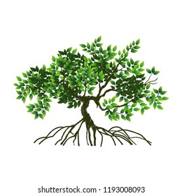 mangrove vector images stock photos vectors shutterstock https www shutterstock com image vector tree roots vector illustrations mangrove 1193008093