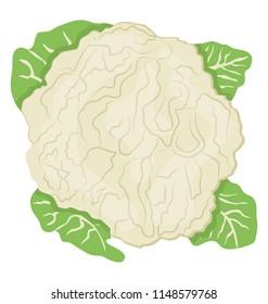 Tree shrub shape graphic with leaves denoting cauliflower icon