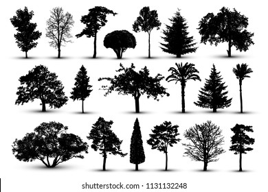 Tree silhouette, forest vector. Nature park. Isolated set, tree on white background
