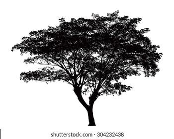 Tree silhouette : Samanea saman