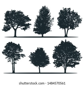 Tree silhouettes - ash, willow, elm, pine, chestnut, alder. Set of different trees. City trees. European nature.