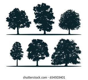 Tree silhouettes - oak, elm, chestnut, sugar maple, ash, beech. The most common tree in England and Europe. Vector.