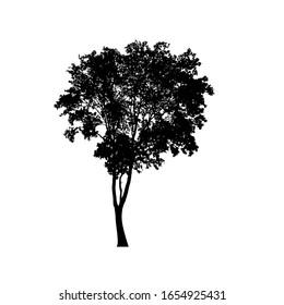 Baum-Silhouetten auf weißem Hintergrund. Vektorillustration-Illustrationsdesign.