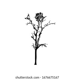 Tree silhouettes on white background. Vector illustration design.