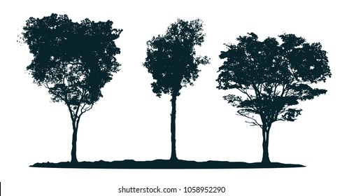 Tree silhouettes - pau brasil tree, rosewood tree, acacia. Set of different south trees.