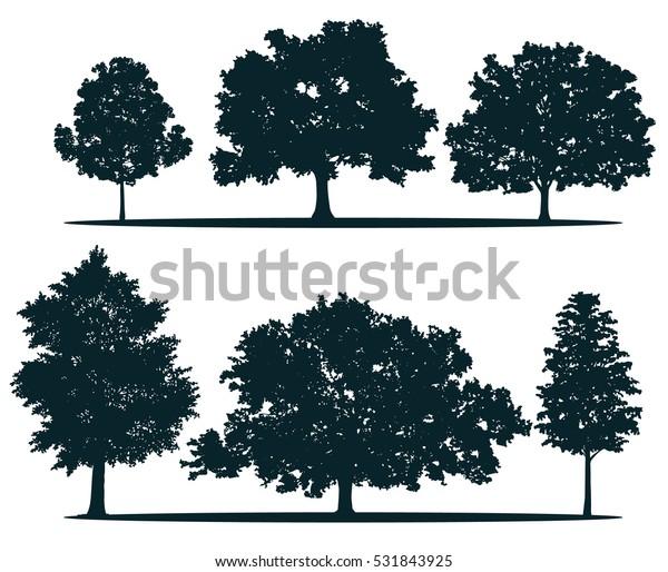 Tree silhouettes - red maple ,sugar maple, oak, poplar, green oak, birch