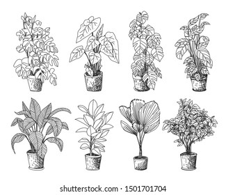 Tree Sketch : Hand drawn architect trees. Sketch Architectural landscape.Indoor ornamental plants. Rubber Plant, Philodendron