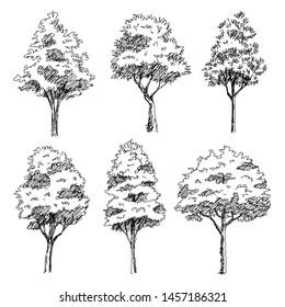Tree Sketch : Set of hand drawn architect trees. Sketch Architectural illustration landscape