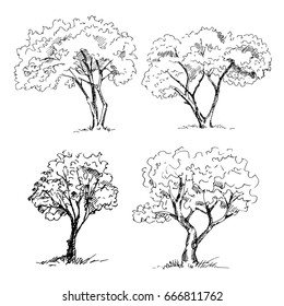 Tree sketches set. Vector illustration.
