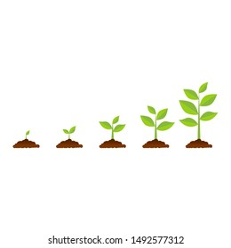 The tree that grows from seed is a big tree with green color and the seedlings grow into a big tree. Vector illustration