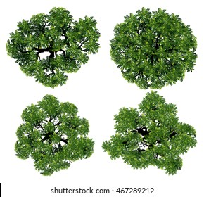 Tree Top View Images, Stock Photos & Vectors | Shutterstock