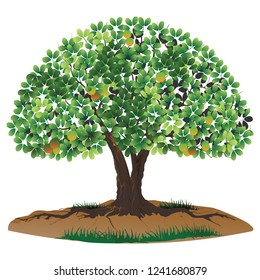 tree vector illustration, large trees that bear fruit, and which have thick leaves