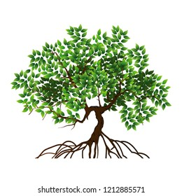 tree vector illustrations, roots, mangrove tree