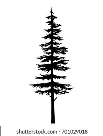 tree vector silhouette pine  black- evergreen cypress - forest vector. Isolated vector coniferous sketch on white background. Can be used in design, illustration.