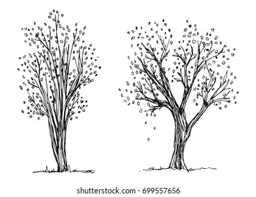 Trees Autumn Hand Drawing Vector The Foliage Is Falling Sketch
