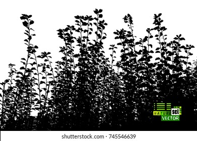 Trees background. branches with leaves. Vector