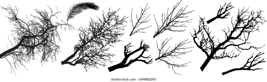 Trees branch silhouette set. Different types of trees branch. Vector illustration