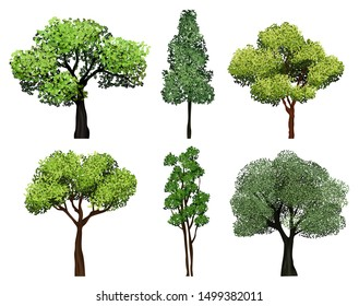 Trees collection. Green plants with leaves ecology garden botanical vector realistic pictures