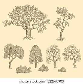 Trees. Design set. Hand drawn engraving. Vector vintage illustration. 8 EPS