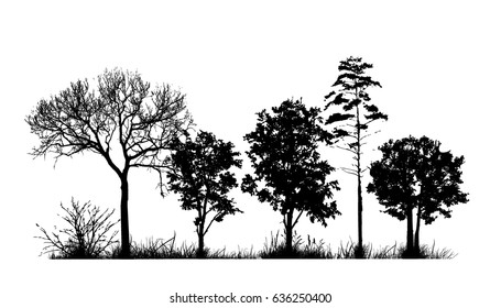 Trees in the forest. landscape. Vector.
