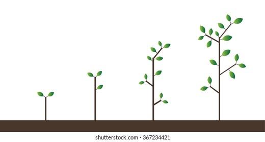 Trees Growing