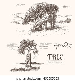 Trees. Growing. Hand drawn vintage engraved illustration of trees and landscape