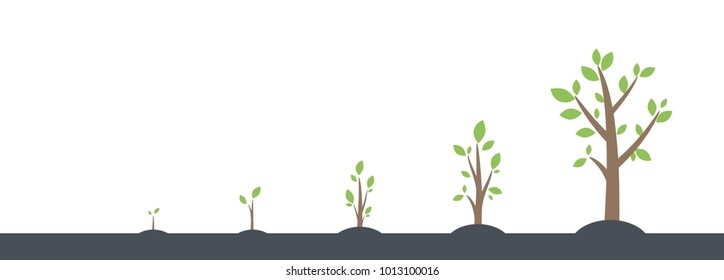 Trees growing process from seed to big tree with foliage. Business strategy or concept of save environments for buy and grow trees.