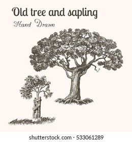Trees. Hand drawn vintage engraved illustration old tree and sapling