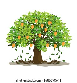 Trees and mangoes, one of the most expensive fruits. Vector illustration