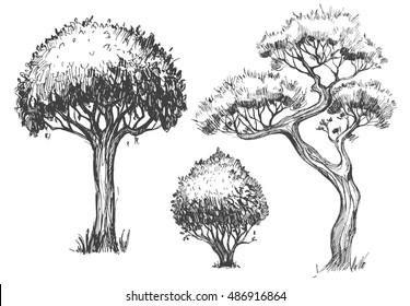 Trees set. Sketch illustration. Vector