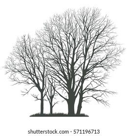 Trees silhouettes.