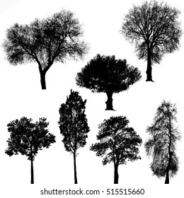 Trees silhouettes on white background, vector illustration
