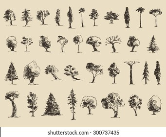 Trees sketch set, vintage illustration, engraved style, hand drawn
