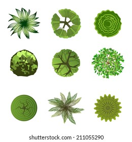 Trees top view for landscape design. Use in your design projects!