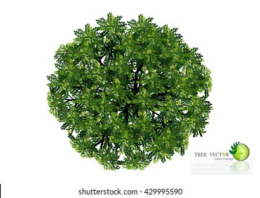 Trees top view for landscape vector illustration decorative branch silhouette and green leaves,design for map