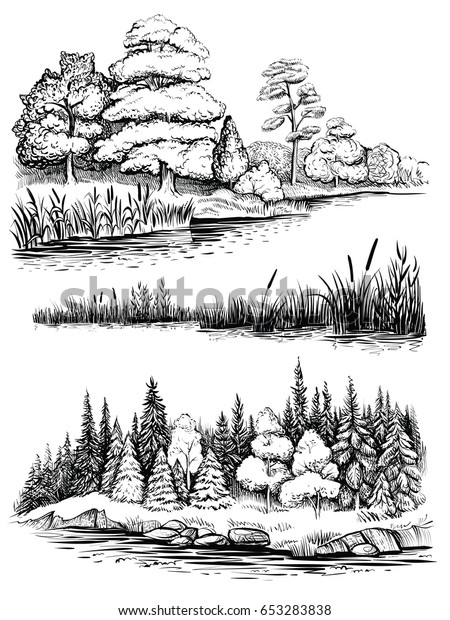 Trees and water reflection, vector illustration set. Riverside landscape with forest, river bank with reed and cattail. Sketchy style.