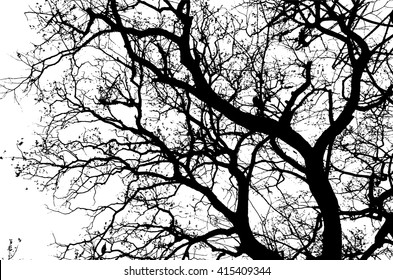 Trees without leaves,Isolated on white background,Black & white image.