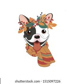 Trendy cool autumn poster.Сute puppy smile with fall foliage. French bulldog black and white with warm scarf, in a wreath of autumn foliage, rose hips and mountain ash. Vector illustration. Color cover
