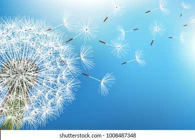 Trendy nature background blue with dandelion blowing seeds. Floral wallpaper with summer or spring flower and flying fluff. Stylish backdrop. Vector illustration