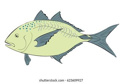 Trevally fish Illustration